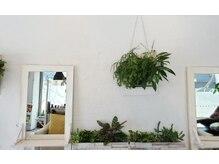ヘアーメイク スクエア ウーノ(HAIR MAKE SQUARE uno)の雰囲気(白を貴重に植物が沢山あります。【大濠】)