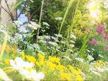 たさわ堂Amoの雰囲気(明るい光が差し込む温かな室内から四季折々の庭も見えます)