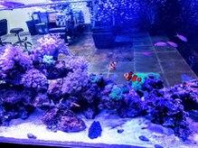 ル シャルム(Le Charme)の雰囲気(水族館に行かないと見れないような,お魚やサンゴが見れます。)