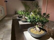 パティオ(PATIO')の雰囲気(水を感じる地中海風の中庭が極上の癒しを。)