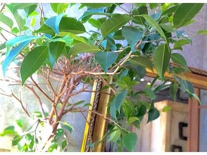 美容室カードル 新小岩店(Cadre)の写真