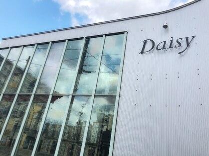 デイジー(Daisy)の写真