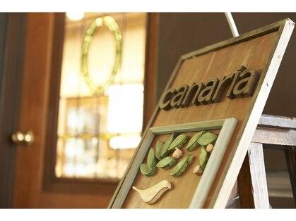 カナリア(canaria)の写真
