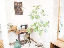 オリーブ(olive)の雰囲気(季節ごとに様変わりするインテリアも魅力のひとつ)