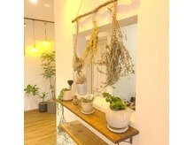 ココット(cocotte.)の雰囲気(緑の多いナチュラルでオシャレな雰囲気の店内です。)