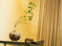 ヘアーエヌプラス (HAIR N+)の雰囲気(ちいさなグリーンたちがお店の空気をクリーンにしています♪)