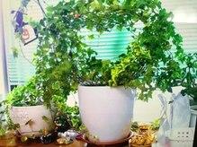 ヘアサロン ハルハル(Haru Haru)の雰囲気(お店の年数と共に成長する観葉植物)