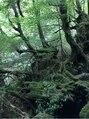 パーフェクトビューティーイチリュウ(perfect beauty ichiryu)旅行大好きで、沖縄や奄美大島、屋久島も行きました!