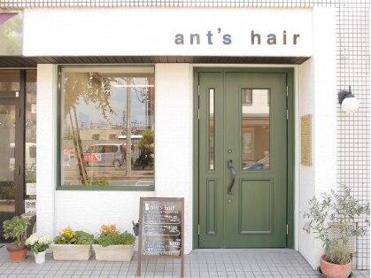 アンツヘア(ant's hair)の写真