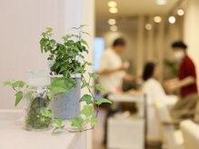 キタドコ パーソナルヘアスタイリストグループ 板橋店(kitadoko)の雰囲気(観葉植物がたくさんあるナチュラル空間♪)