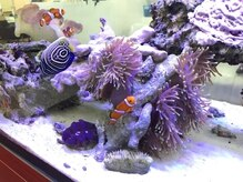 美容室メデューサ都府楼店の雰囲気(水を化学した美容室の海水魚水槽で沖縄っぽく癒される)