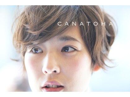 カナトハ(canatoha)の写真