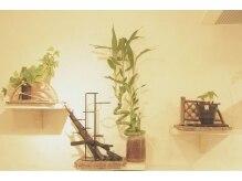 ジャスティス ヘアスペース(JUSTICE HAIRSPACE)の雰囲気(和の観葉植物)