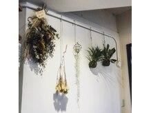 リヒト(Licht)の雰囲気(観葉植物やドライフラワーにホッと癒される…)