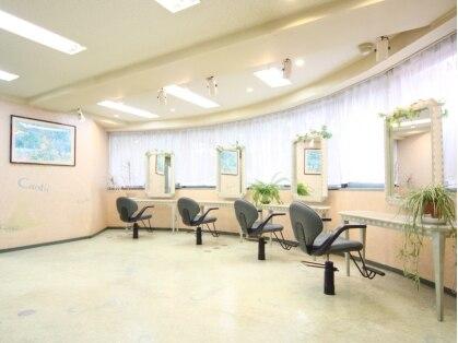 チャンティーヘア 板橋店(Cantii hair)の写真