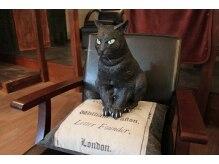 アングレカム(Angraecum)の雰囲気(目つきの悪い招き猫です。役に立ってるかは謎です。)