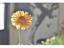 フラワー(Flower)の雰囲気(Flower 2012・0702~)