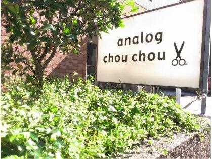アナログシュシュ(analog chou chou)の写真