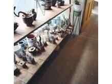キチ(kichi)の雰囲気(植物でいっぱいの秘密基地のような空間)