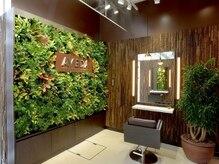 アヴェダ ライフスタイル サロンアンドスパ 南青山の雰囲気(緑あふれる店内で心も体も癒されて―贅沢なサロンタイムを。)