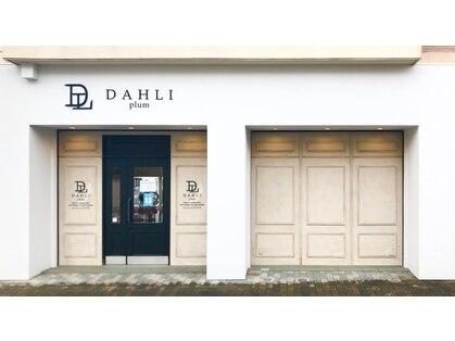 ダリプリュム(DAHLI plum)の写真