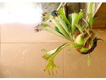 クージー ヘア アイラッシュ(cooosy hair eyelash)の雰囲気(奇怪植物だらけです!【博多東比恵】【cooosy博多東比恵】)