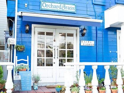 オーチャードグラス(Orchardgrass)の写真