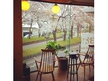 パンセ(PENSER)の雰囲気(店の前が毎年お花見スポットになります。花びらが目の前!)