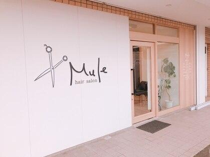ミュール(Mule)の写真