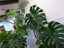 アイリス ヘアデザイン(IRIS HAIR DESIGN)の雰囲気(お店に入ると大きな観葉植物がお出迎え!)