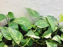 インディゴブルー バーム店(INDIGO BLUE)の雰囲気(髪に優しいはもちろん 植物にも心地いいお店を目指してます♪)