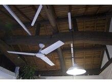 パパラギ ママラギの雰囲気(天井)