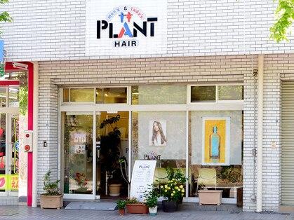 ヘアープラント(HAIR PLANT)の写真