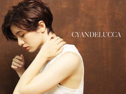 シアンデルカ(CYANDELUCCA)の写真