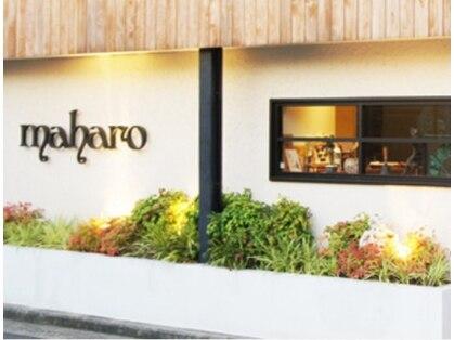 マハロ (maharo)の写真