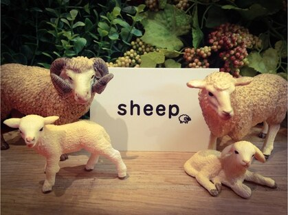 シープ(sheep)の写真