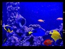 アムールピコ 浦安(Amour Pico)の雰囲気(癒しの熱帯魚。お客様から人気です)