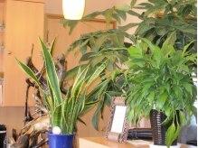 アリス美容室の雰囲気(癒しの空間でホットするひとときを。コーヒーサービスあり。)