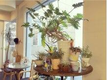 ヘアメイク サラリ(hair make SARARI)の雰囲気(外からの光が入るレセプションではたくさんの植物がお出迎え)