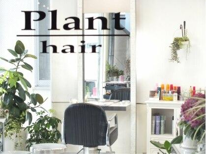 プラントヘアー(Plant hair)の写真