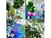 ブラスカ(brasca)の雰囲気(ドライフラワーと観葉植物に囲まれた癒しの空間です)