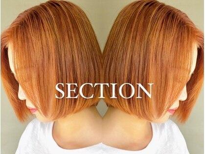 セクション(SECTION)の写真