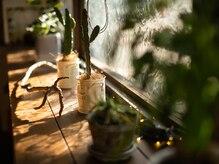 フィールソーナイス フォーヘアー(FEEL SO NICE FOR HAIR)の雰囲気(木目調の店内でたくさんの緑に囲まれながらリラックス…♪)