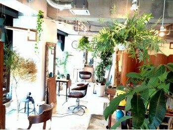 ハシ(hasi)の写真/緑がたくさんで落ち着く店内と、気さくなスタッフさんたち♪この雰囲気に、きっとあなたもやみつきに―…☆