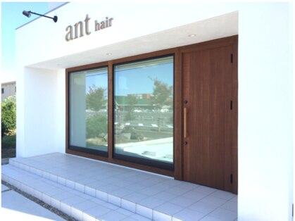 アント(ant)の写真