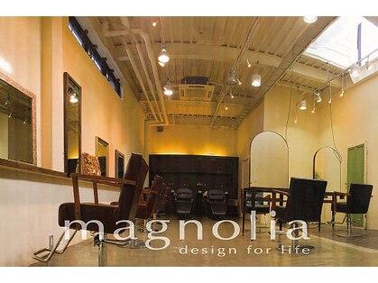 マグノリア(magnolia)の写真