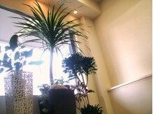 ルーム151(Room151)の雰囲気(植物たくさんの癒し空間☆)