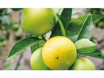 睡眠改善専門 サロン 萃(Sui)/ベルガモットの香りのバーム使用