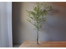トミセラピー(TOMI THERAPY)/季節の花や緑に癒されて