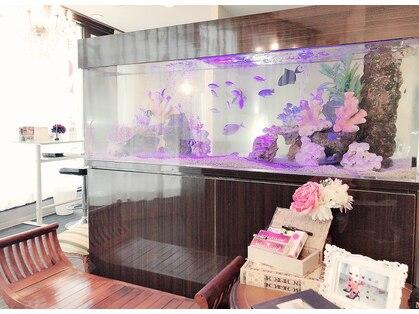 アイラッシュサロン セリナ 新宿東南口店の写真